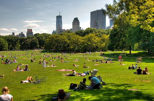 Punaises de lit New York City en été