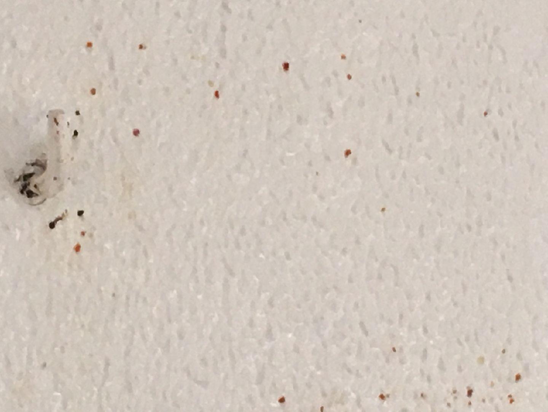 Traitement punaise de lit punaise de lit le traitement holidays oo - Punaise de lit traitement naturel ...