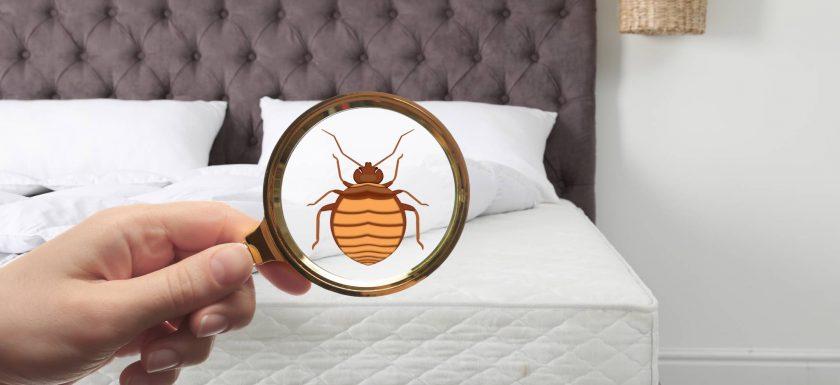 infestation des punaises de lit en France.